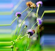 Flowers On Summer Meadow Print by Tommy Hammarsten
