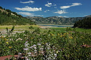 Flowers On The Palisades Resevoir Idaho Print by Larry Moloney