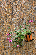 Sicily Photo Prints - Flowers on wall - Taromina Print by David Smith