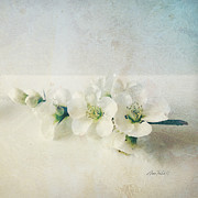 Off White Prints - flowers Pale Spring Blossoms  on Square   Print by Ann Powell