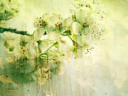 Pear Art Mixed Media Prints - Flowers Pear Blossoms Springtime Joy Print by Ann Powell