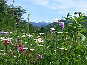 Nancie Martin Demellia Art - Flowers View of the Mountains by Nancie Martin DeMellia