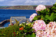 Sennen Cove Framed Prints - Flowers with a Sea View Framed Print by Terri  Waters