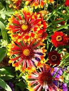 Van Ness - Flowers With Pollinators