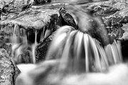 Creeks Prints - Flowing  Print by JC Findley