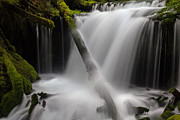 Flowing Water Prints - Flowing Serenity Print by Mike Reid
