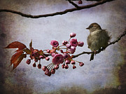 Barbara Orenya Prints - Fluffy Sparrow  Print by Barbara Orenya