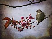 Barbara Orenya - Fluffy Sparrow
