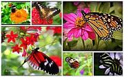 Fluttering Butterflies Print by Dora Sofia Caputo
