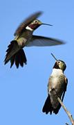 Birds - Fluttering by Shane Bechler