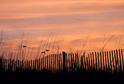 Beach Fence Prints - Fly Away Home Print by Stephanie McDowell