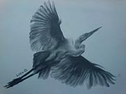 Waterfowl Drawings - Fly Away by Lucy D