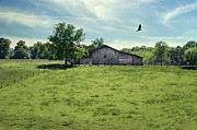 Country Scene Photos - Fly By by Steven  Michael