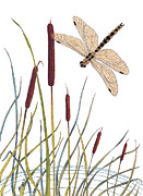Tails Prints - Fly Dragonfly Print by Constance Widen
