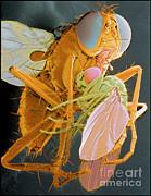 Volker Steger - Fly Eats Fly