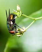 All - Fly Macro by Jaci Harmsen