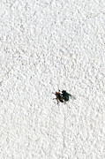 Buy Sell Photo Posters - Fly On A Wall Poster by Alexander Senin