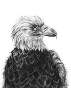 Drawing Of Eagle Drawings - Fly On Free Wings by J Ferwerda