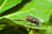 All - Fly on Leaf by Jaci Harmsen