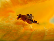 Rosvin Des Bouillons Gamboa - Fly on Orange