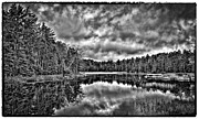 Fir Trees Photos - Fly Pond on Rondaxe Road III by David Patterson