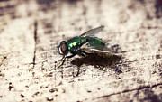 Spider And Fly Prints - Fly Profile Print by Melanie Lankford Photography