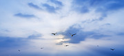 Seagull Prints - Fly To Freedom Print by Setsiri Silapasuwanchai