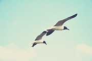 Flying Seagulls Framed Prints - Fly With Me Framed Print by Libertad Leal