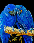 Hyacinth Macaw Posters - Flying Colours Poster by Susan Duxter