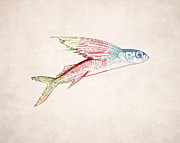 Animal Drawings Posters - Flying Fish Illustration Poster by World Art Prints And Designs