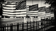 Carolyn Pettijohn - Flying Flags in Black and White