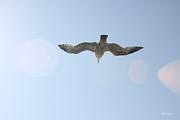 Diana Haronis - Flying Free