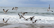 Scott Phillips Art - Flying Gulls by Scott Phillips