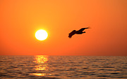 Tropical Sunset Metal Prints - Flying into the sun Metal Print by David Lee Thompson