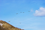 Flying Seagulls Art - Flying over the dunes  by Angela Doelling AD DESIGN Photo and PhotoArt