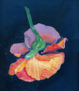 Navy Paintings - Flying Pansy by Katherine Miller