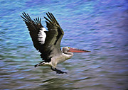 Australian Open Metal Prints - Flying Pelican 2 Metal Print by Heng Tan
