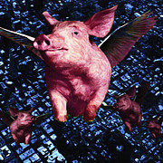 Pet Pig Prints - Flying Pigs Over San Francisco - square Print by Wingsdomain Art and Photography