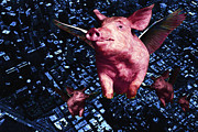 Pet Pig Prints - Flying Pigs Over San Francisco Print by Wingsdomain Art and Photography