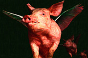 Belly Digital Art Prints - Flying Pigs v3 Print by Wingsdomain Art and Photography