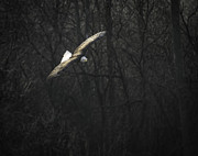 Fox River Framed Prints - Flying The River Framed Print by Thomas Young