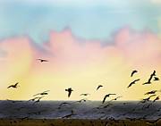 Flying Seagulls Framed Prints - Flying toward sunset Framed Print by Camille Lopez