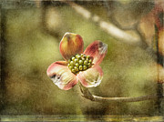 Focus On Dogwood Print by Terry Rowe