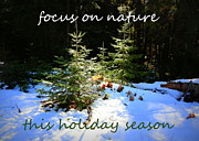 Snowy Holiday Card Posters - Focus on Nature Holiday Card or Poster Poster by Carol Groenen