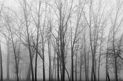 James Blackwell JR - Fog and Trees 4