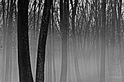 Diana Boyd - Fog in the Dark Forest