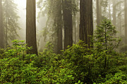Damnation Photo Prints - Fog in the Forest Print by Donald A Higgs