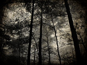 Forest Pyrography Metal Prints - Fog in the Forest Metal Print by Lorraine Heath