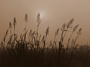 Deborah Smith - Fog Marsh Morning