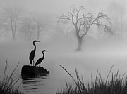 Nina Bradica Metal Prints - Fog on the Lake Metal Print by Nina Bradica